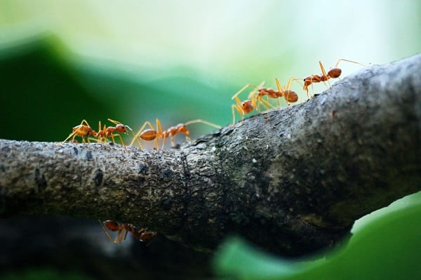 Ants Don't Just Go with the Flow. They Organize it!