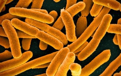 Pro-AG System Inactivates Genes that Make Bacteria Resist Antibiotics