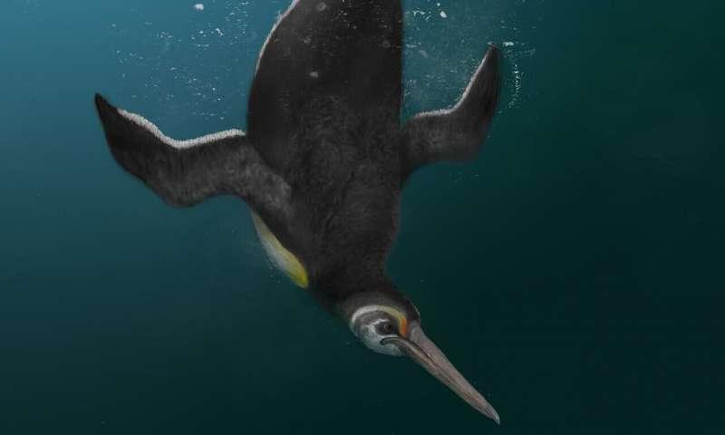 ancient penguin kupoupou